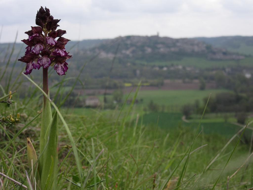Trespes - La Couronne