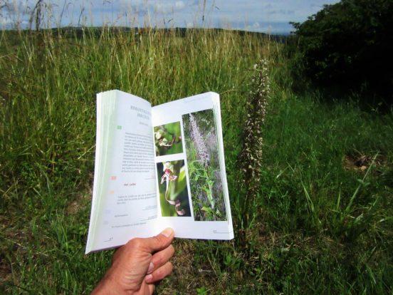 Les orchidées sauvages du Tarn: LE livre