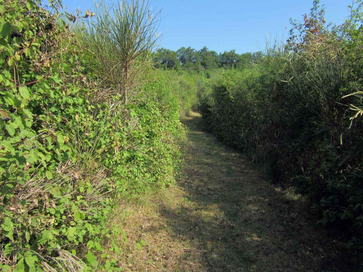 Le Labyrinthe de La Couronne - Ligne droite