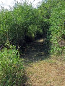 Le Labyrinthe de La Couronne - Tunnel de verdure